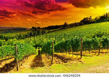 Hill of Tuscany with Vineyard at Sunset