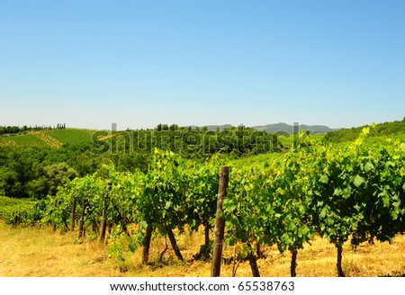Hill Of Tuscany With Vineyard In The Chianti Region - stock photo