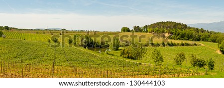 Hill of Tuscany with Vineyard in the Chianti Region, Panorama