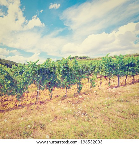 Hill of Tuscany with Vineyard in the Chianti Region, Retro Effect