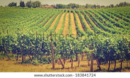 Hill of Tuscany with Vineyard, Instagram Effect - stock photo