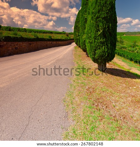Hill of Tuscany with Vineyards and Cypresses at Sunset, Vintage Style Toned Picture  - stock photo