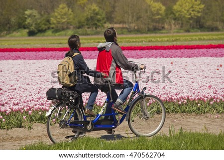 Hillegom, Holland - May 5, 2016: Man and woman on tandem bike ride through a flower field with pink, purple and red tulips in Hillegom, Holland on May 5, 2016