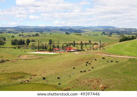 Hills and meadows of New Zealand. Green pastures and a farm with cows grazing in Wanganui district.