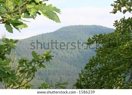 Hills and trees 2