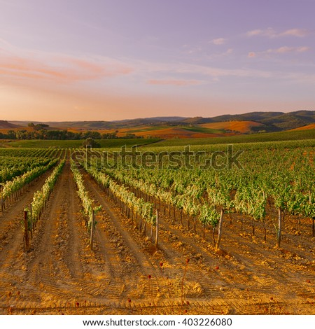 Hills of Tuscany with Vineyards at Sunset - stock photo