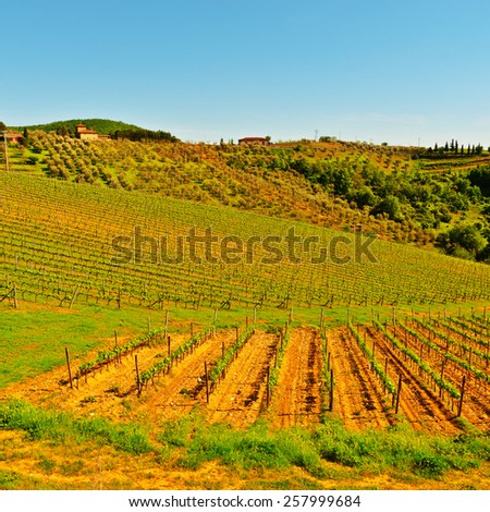 Hills of Tuscany with Vineyards in the Chianti Region