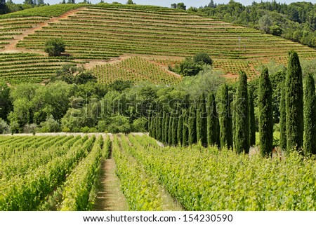 Hills with grape vines planted in rows - stock photo