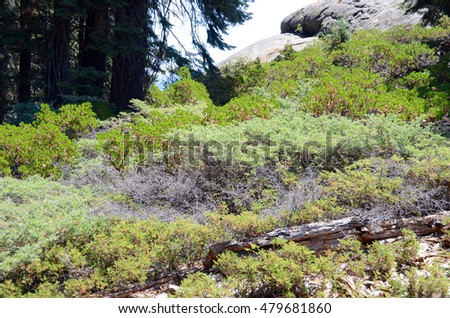 Hillside greenery in Sequoia National Park