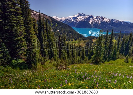 Hillside meadow overlooking the blue-green lake, snow-capped mountains afar - stock photo
