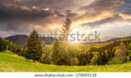 hillside of mountain range with coniferous forest and meadow in sunset light - stock photo