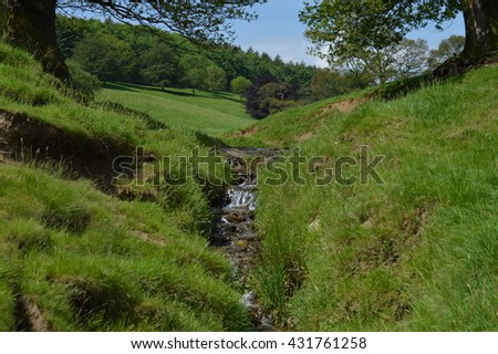 Hillside Stream with Trees.