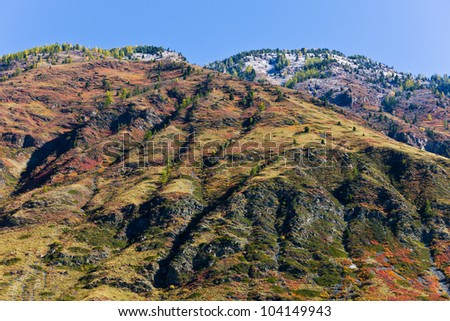 hillside with multi-colored plants in the autumn