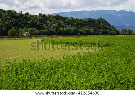 Hilly landscape in Italy