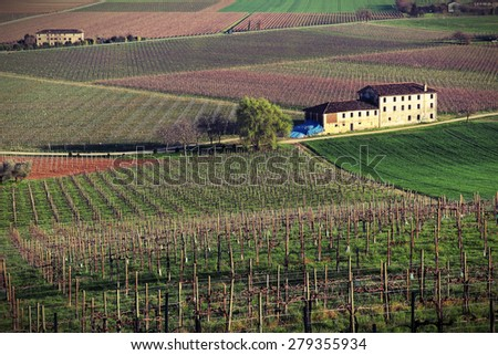 Hilly landscape planted with grape of Prosecco, Italy - stock photo