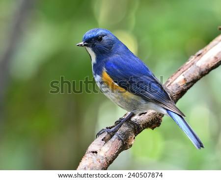 Blue and orange bird logo - photo#26