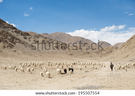 Himalayan mountain landscape in  Ladakh , North India  - stock photo