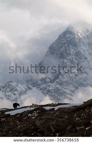 Himalayan Yak silhouette in evening mist at Lobuche, near Everest Base Camp, Upper Khumbu, Nepal. This telephoto portrait view compresses the distance of Mt. Tobuche shoulder, 6 km away.