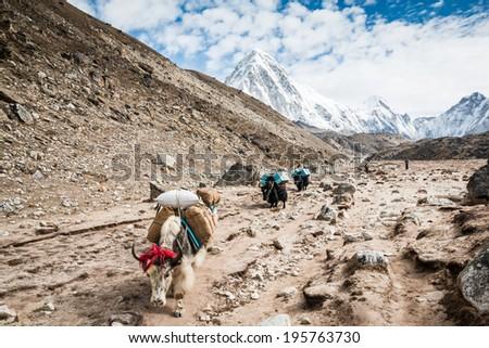 Himalayas, Nepal - stock photo