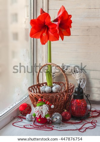 Hippeastrum on the window decorated for Christmas (products of mass production)