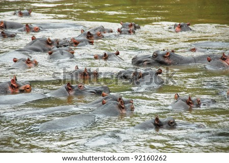 Hippo, Ishasha river, Queen Elizabeth National Park, Uganda - stock photo