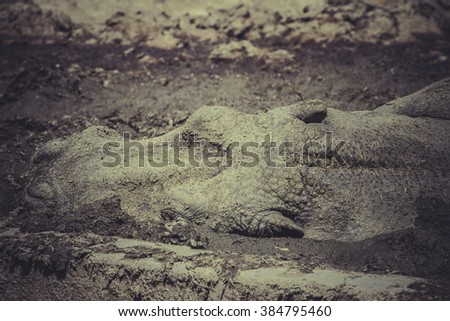 hippo resting in the mud - stock photo