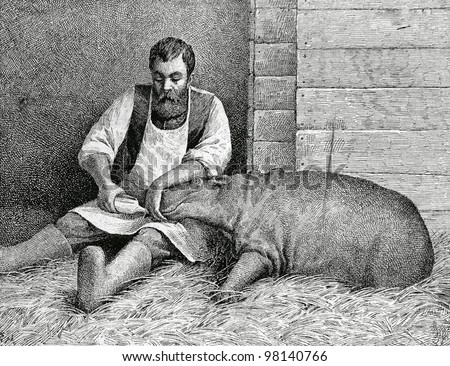 "Hippo, who was born in St. Petersburg's zoo. Engraving by Angerer from picture by Obolensky . Published in magazine ""Niva"", publishing house A.F. Marx, St. Petersburg, Russia, 1888"