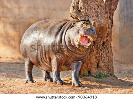 Hippopotamus on a tree - stock photo