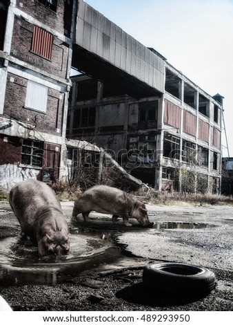 Hippos in Urban Jungle. Hippos in an abandoned urban factory grounds.