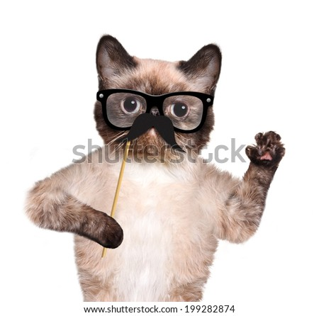 Hipster cat - stock photo