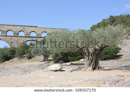 Historic aqueduct Pont du Gard in South France and his famous olive tree - stock photo
