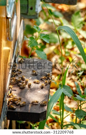 Hive in an apiary with bees flying to the landing board in a garden in autumn - stock photo