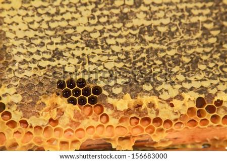 hive of honey bees - stock photo