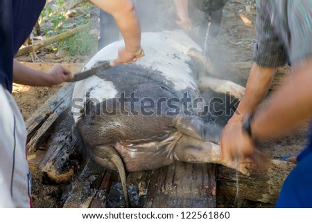 Hmong in Thailand to killing pig - stock photo