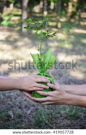 Hnads holding green plant in hands. Ecology concept
