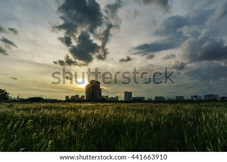 HO CHI MINH CITY , VIETNAM JUNE 20 2016 : Sunset on meadow mop