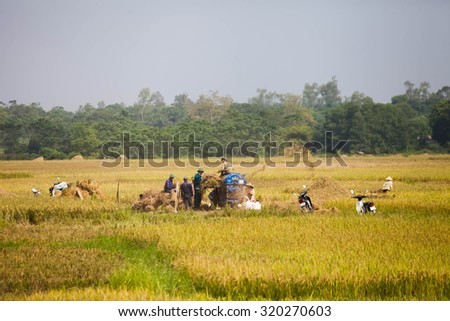 HOA BINH VIETNAM Sept 25 2015 unidentified farmer are harvesting rice and carries rice from the farm home in Hoa Binh, Vietnam. Hoa Binh is a biggest rice stock in north Vietnam