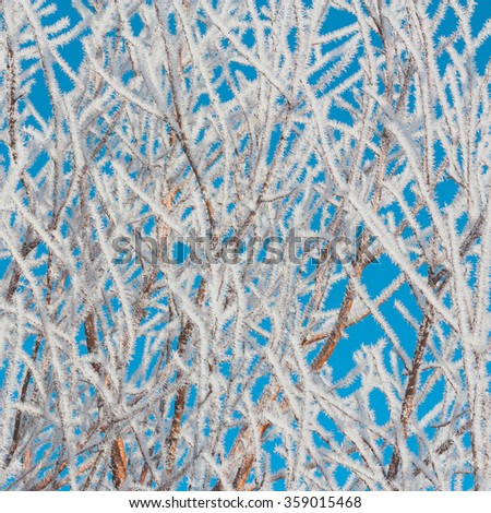 Hoar Frost covered foliage with a blues sky background. - stock photo