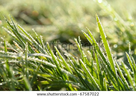 hoar frost green grass under autumn sun