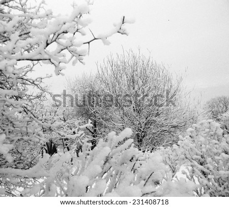 Hoarfrost branches and bushes, Kolomenskoe, Moscow, Russia. Winter snow background. - stock photo