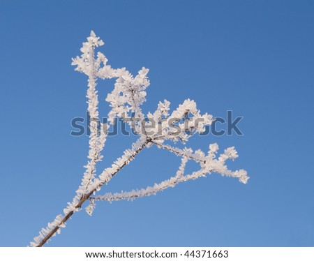 Hoarfrost on dried plant against blue sky