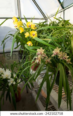 Hobbist owned backyard garden greenhouse with blooming orchids plants. - stock photo