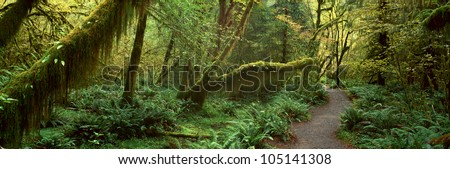 Hoh Rainforest, Olympic National Park, Washington - stock photo