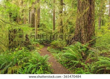 Hoh Rainforest, Olympic National Park, Washington state, USA - stock photo