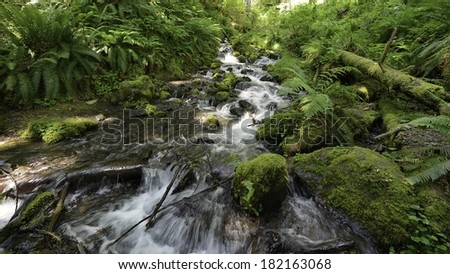 Hoh River Trail with rushing mountain water - Olympic Peninsula - stock photo