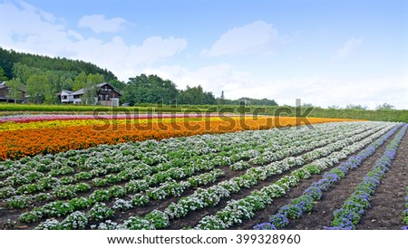 Hokkaido, Japan - August 13, 2014: Farm Tomita is one of the famous tourist attraction flower field in Furano, Hokkaido, Japan