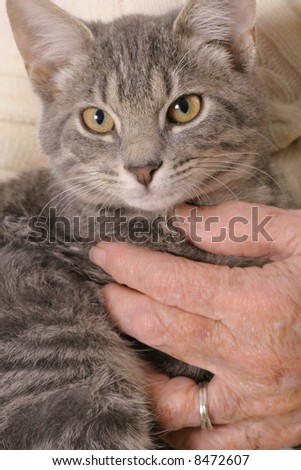 holding a kitten - stock photo