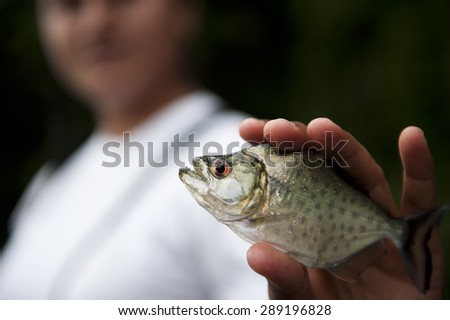 Holding a peruvian yellow piranha in the Amazon in Puerto Maldonado. - stock photo