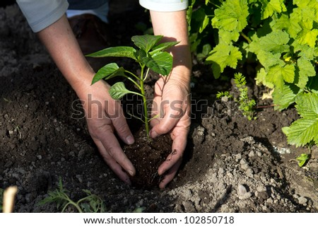 holding a plant isolated on a nature background - stock photo