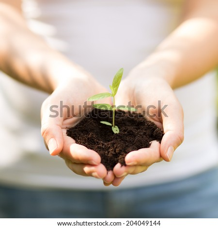 holding a small plant in hands -close up - stock photo
